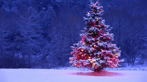 BHO Christmas 2014