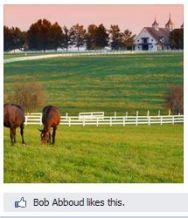 SOS FB Page Album Likes