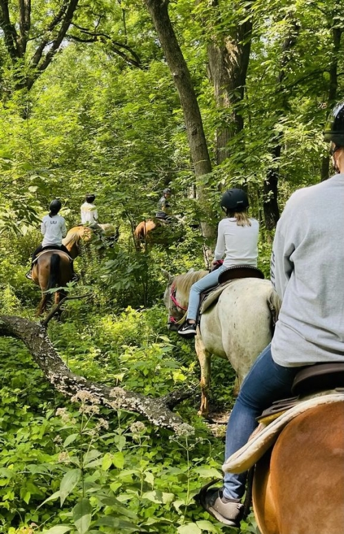 Forest Trails Stables