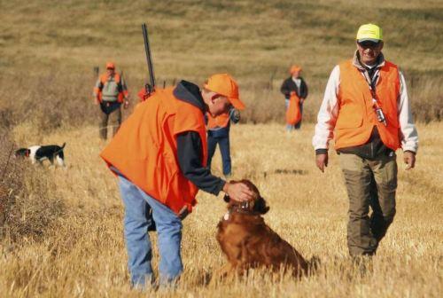 pheasant hunting season